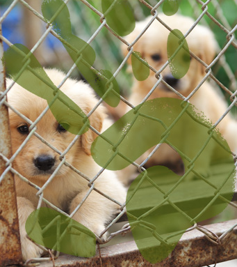Petland Pets Chicago, Illinois - Premium Puppies, Pets