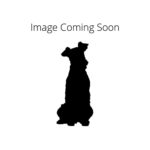 Petland Pets & Puppies Chicago Illinois Dandie Dinmont Terrier